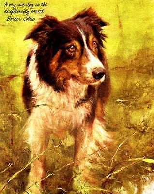 Border Collie - Vintage Dog Art Print - Poortvliet