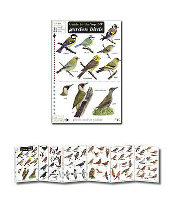Field Guide to the Top 50 Garden Birds Laminated Identification Chart Poster