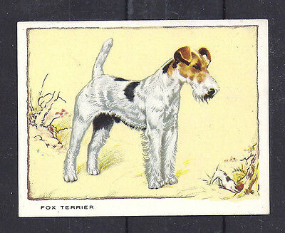 1934 UK Dog Art Body Gallaher Cigarette Large Trade Card WIRE HAIRED FOX TERRIER