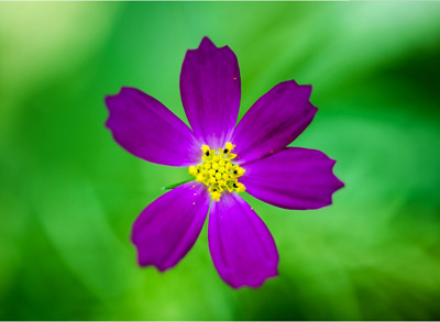 10x Flying Butterfly  Surprise greeting Card book Magic Toy fly wind up