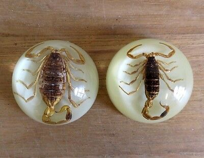 Set of 2 Large Glow in The Dark Scorpion Refrigerator Magnets New