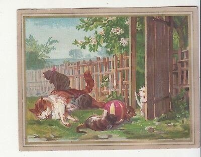 Kittens Cats Playing with Ball in Fenced in Yard No Advertising Vict Card c1880s
