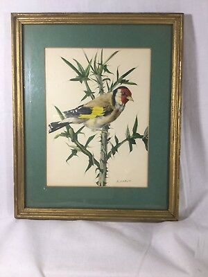 Pair Of Vintage Bird Prints By A. Marlin Framed Vibrant Colors