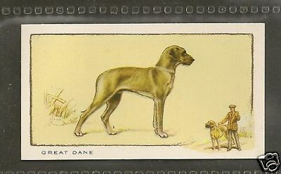 1934 UK Dog Art Full Body Gallaher Cigarette Card Natural Ears Fawn GREAT DANE