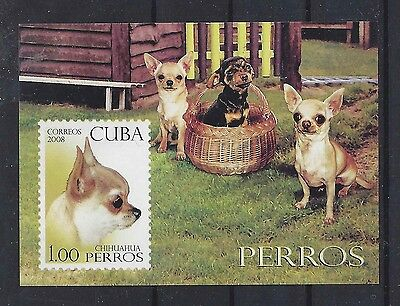 Art Photo Postage Stamp SMOOTH COATED CHIHUAHUA DOG Souvenir Sheet Imperf MNH
