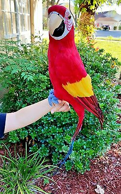 X-Large Handcrafted Ultra Lightweight Parrot With Real Feathers/bendable Feet!