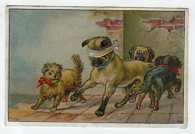 Pug And Dogs Playing Hide-And-Go-Seek On Tradecard For Clicquot Club Ginger Ale