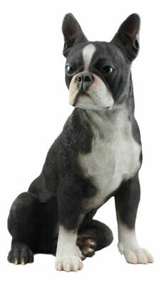 "Life Sized Adorable Boston Terrier Dog Statue 16""H Pedigree Dog With Glass Eyes"