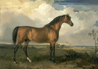 LMOP454  rare strong horse landscape hand painted art oil painting on canvas