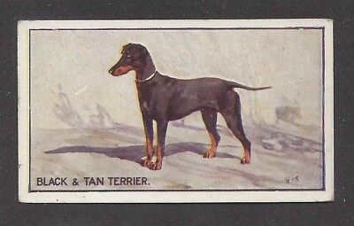 1926 George Vernon Stokes Dog Art Sanders Custard Jelly Card MANCHESTER TERRIER