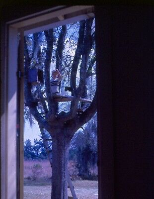 vintage 35mm slide boy up tree house view from window or door