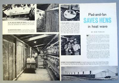 Original 1961 Poultry Photo Article Features Lee Van Atta, Santa Clara County CA