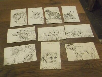 25 Rare Vintage Wcb Hele Artist Animal Drawings Signed  Postcards -All Scanned