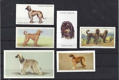 Rare 1931 - 1979 UK Dog Art Cigarette Trade Card Collection x 6 AFGHAN HOUND