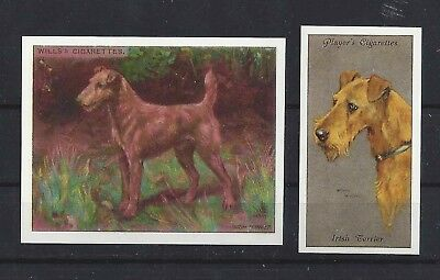 1915 - 1940 UK Reissue Reproduction Dog Art Cigarette Card Set x 2 IRISH TERRIER