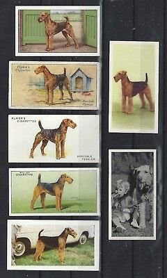 Rare 1931 - 1961 UK Dog Art Cigarette Trade Card Collection x 7 AIREDALE TERRIER
