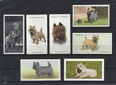 Rare 1929 - 1979 UK Dog Art Cigarette Trade Card Collection x 9 CAIRN TERRIER