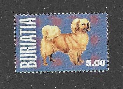 Dog Art Body Study Portrait Postage Stamp TIBETAN SPANIEL Buriatia MNH