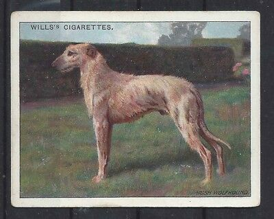 1915 Original UK Wardle Dog Art Study Wills Cigarette Card IRISH WOLFHOUND