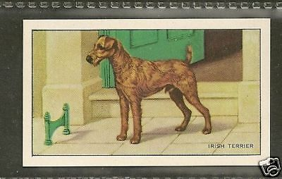 Rare 1936 UK Dog Art Full Body Gallaher Series A Cigarette Card IRISH TERRIER