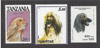 Dog Art Head Study Portrait Postage Stamp Collection BM Red AFGHAN HOUND 3 x MNH
