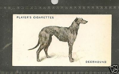 1931 UK Arthur Wardle Dog Art Full Body Player Cigarette Card SCOTTISH DEERHOUND