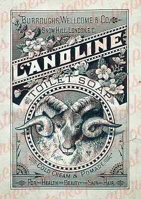 c.1800's 'LANOLINE' TOILET SOAP MEDICAL HOUSEHOLD ADVERTISING A3 PRINT