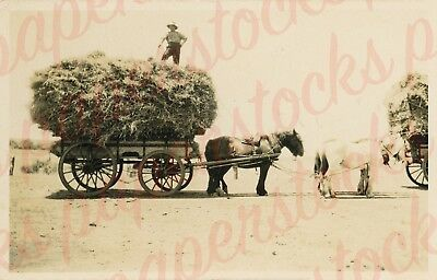 c.1900 HAY FARMING CLYDESDALE OMEO VICTORIA A3 PRINT REAL PHOTO HISTORICAL PLAIN