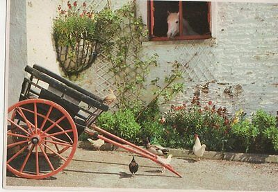 An Irish Stable Yard Postcard Ireland  246a