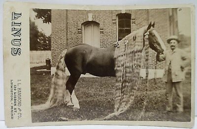 "Antique Cabinet Card Photo ""linus"" The Horse With Long Mane & Tail"