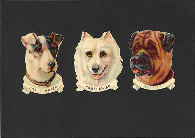 Victorian Die Cut Scrap - Dog Types
