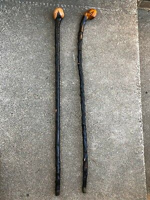 Early VTG lot Of 2 authentic walking stick cane Irish Blackthorn Shillelagh
