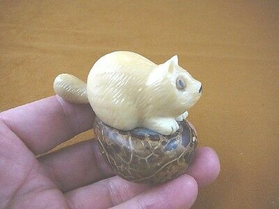 (tn-rac-600) white RACCOON raccoons TAGUA NUT Figurine Carving Vegetable ivory