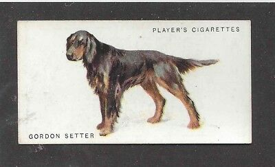 1931 UK Arthur Wardle Dog Art Body Study Player Cigarette Card GORDON SETTER