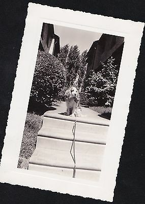 Old Vintage Antique Photograph Adorable Puppy Dog on Leash At Top of Stairs 1938
