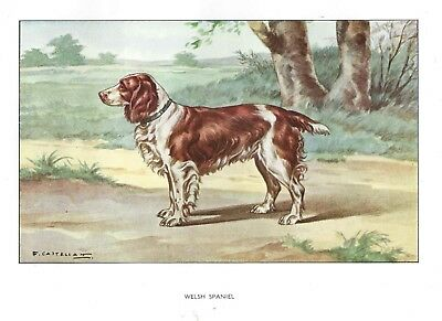 1930 Art Francois Castellan France Dog Watercolor Print WELSH SPRINGER SPANIEL