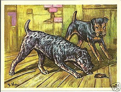 1952 Dog Art Print Card Austria Tobacco Company Bildwerk LAKELAND WELSH TERRIER