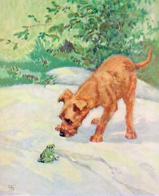 1932 Irish Terrier Diana Thorne Playful Puppy Staring at a Frog Art Print