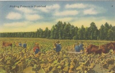 Picking Tobacco in Dixieland ngl E9133