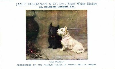 Advertising. Black & White Scotch Whisky by James Buchanan, Holborn. Terriers.