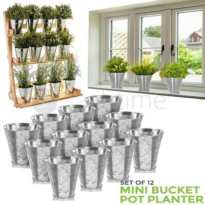 Set Of 12 Mini Bucket Pot Planter Galvanised Iron Flower Herb Planters Garden