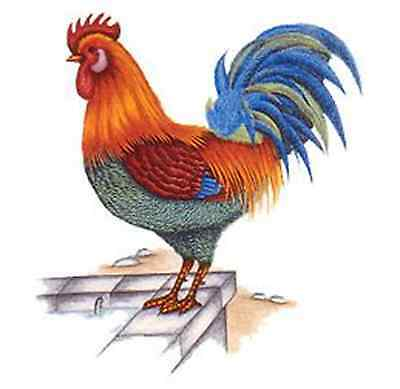 "4 Rooster Vibrant Colors 2""  Waterslide Ceramic Decals Ox"