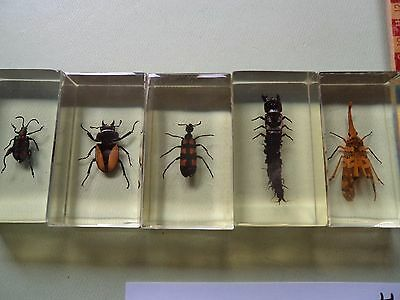 "Natural history Taxidermy Group - Real Life "" Bugs and Insects "" Educational AD5"
