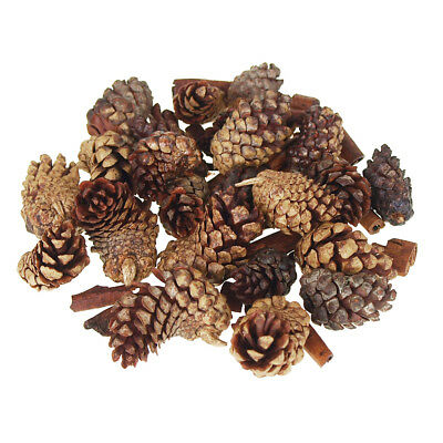 Dried Pine Cones Natural Forms with Cinnamon Sticks, 30-Piece