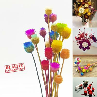 100 Dried Preserved Happy flower Dry stem Wedding Room Bottle decorative Vial