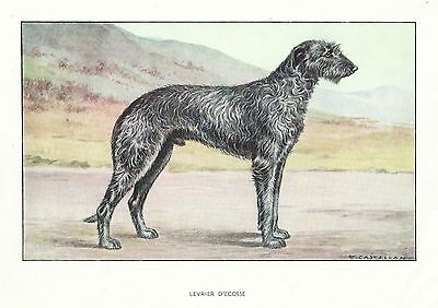 Rare 1930s Art Watercolor Dog Print France Francois Castellan SCOTTISH DEERHOUND