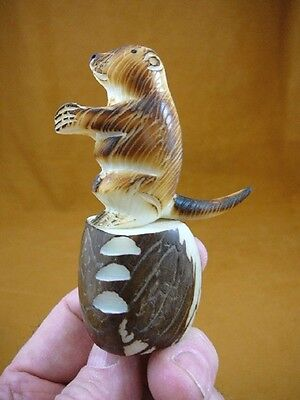 (TNE-OTT-259-A) brown Otter Nutria TAGUA NUT Figurine Carving Vegetable ivory