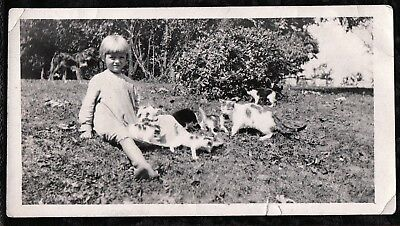 Vintage Photograph 1920-30's Girls Fashion Lots Of Cats Kittens Dog Old Photo