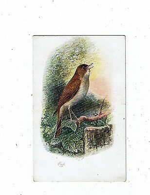 Post Cards Birds Art Cards By George S Ramsey Of A Nightingale