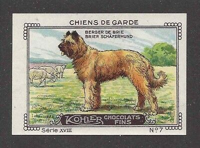 Rare 1931 France Nestle Cailler Kohler Dog Art Trade Card BERGER DE BRIE BRIARD